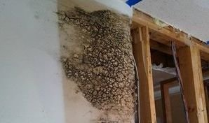 Water Damage Caused Mold Growth