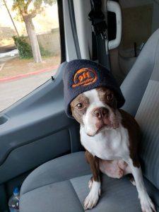 911-restoration-dog